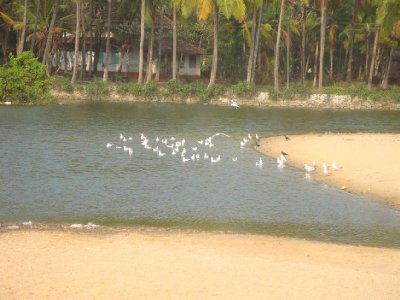 Kannur Beach House Lagoon