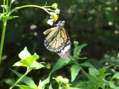 Butterfly along hiking trail