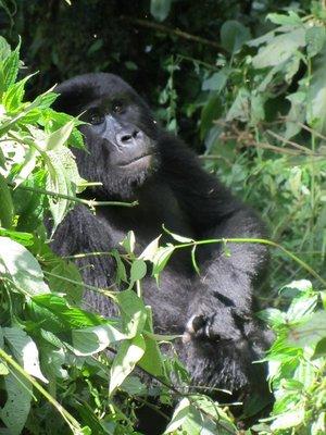 gorilla_trek_170.jpg