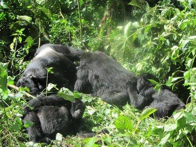 gorilla_trek_189.jpg