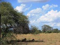 2_lionesses.jpg