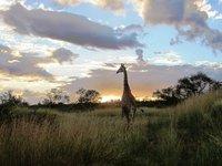 Kruger_Day..d_3_616.jpg