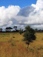 africa_landscape2.jpg