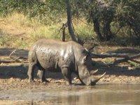 muddy_rhino.jpg