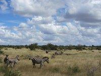 zebra_landscape.jpg