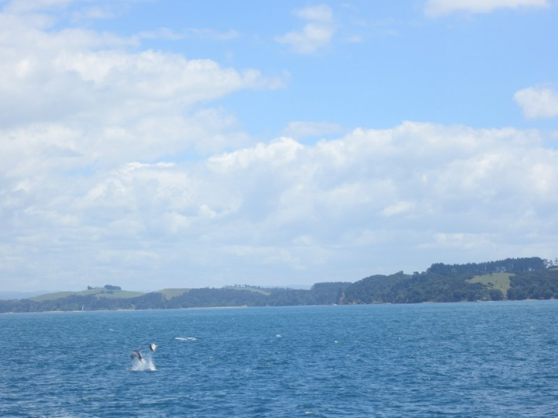 Bay of Islands and Dolphins!