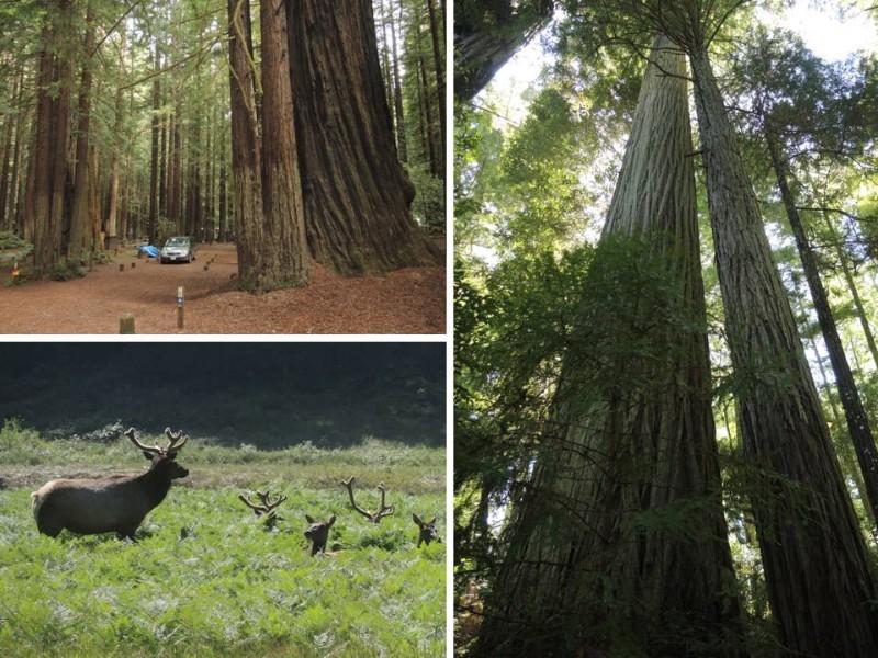 large_Redwoods.jpg