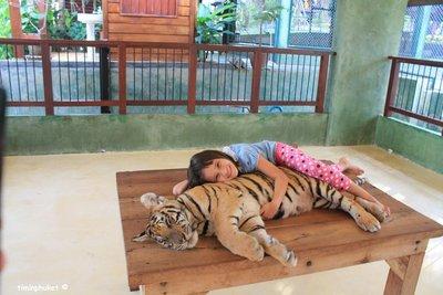 tiger.8