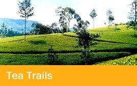 Tea Trail