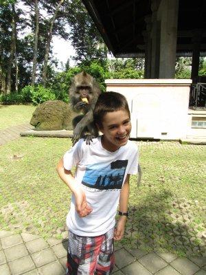 Monkey eating banana feels safe on Tom's shoulder