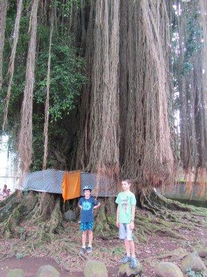 Boys standing next to tree near village