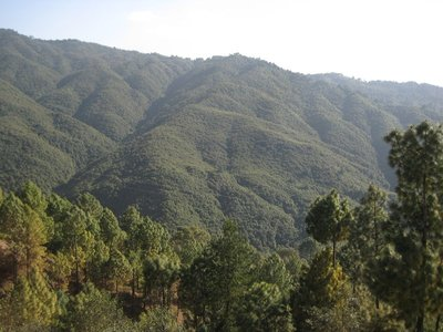 Rain Forest at the foot of the Himalayas