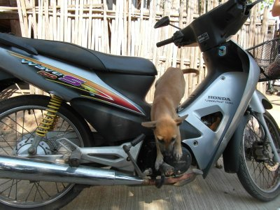Puppies clambering over the bike