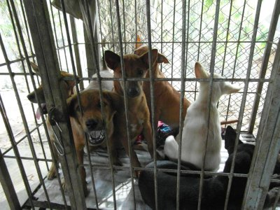 First street puppies for sterilization
