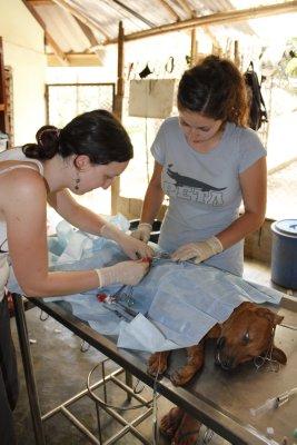 Sterilizing female pup