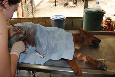 Male sterilization