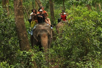 Chrashing through the jungle - Chitwan