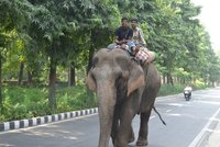 Elephant in New Delhi