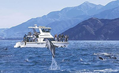 Boat_and_Dolphins.jpg