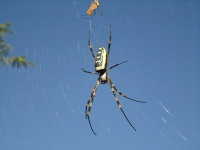 spider_resized.jpg