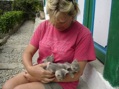 Above: Teresa with the kittens at the lodge we stayed at in Nunthala.