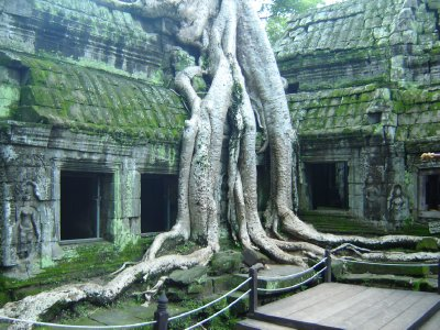 Above: Ta Prohm has been left mainly unrestored and the trees have taken over many buildings.