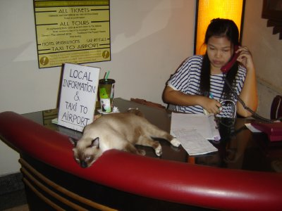 Above: The hotel's cat was very helpful with local information and taxi services!