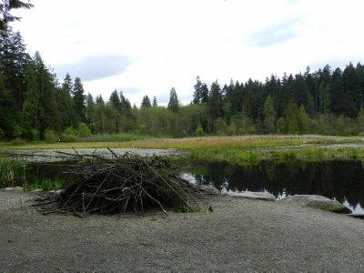 Stanley Park: Beaver Lake