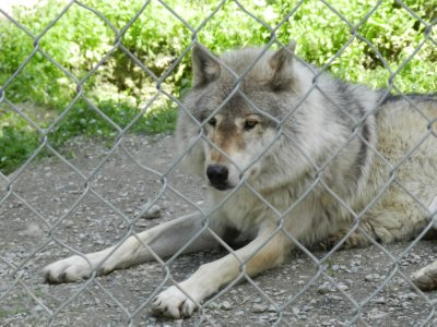 Wolf Centre