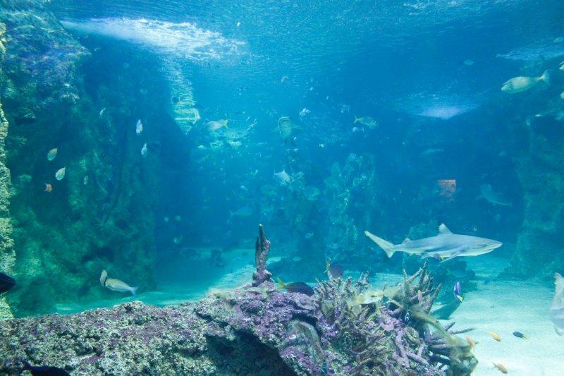 large_Aquarium.jpg
