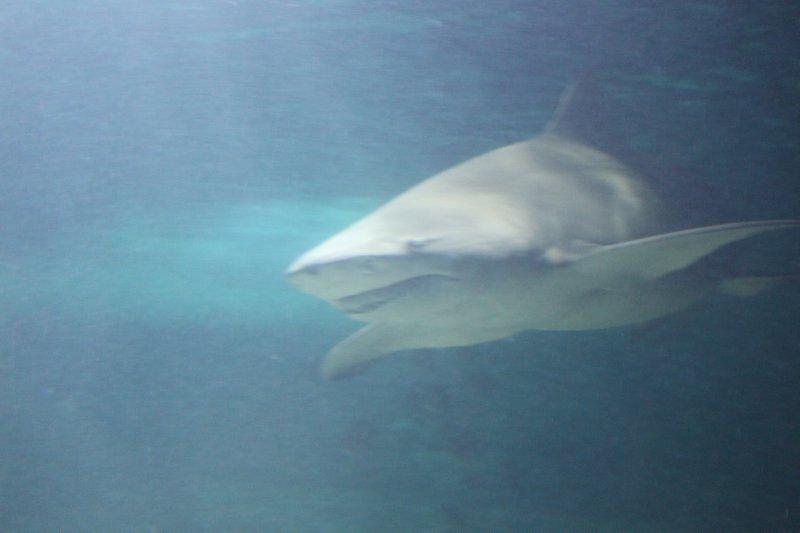 large_Shark.jpg