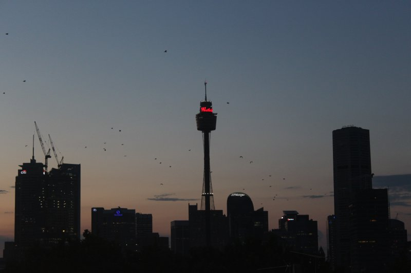 large_Sydney_Evening_Skyline.jpg