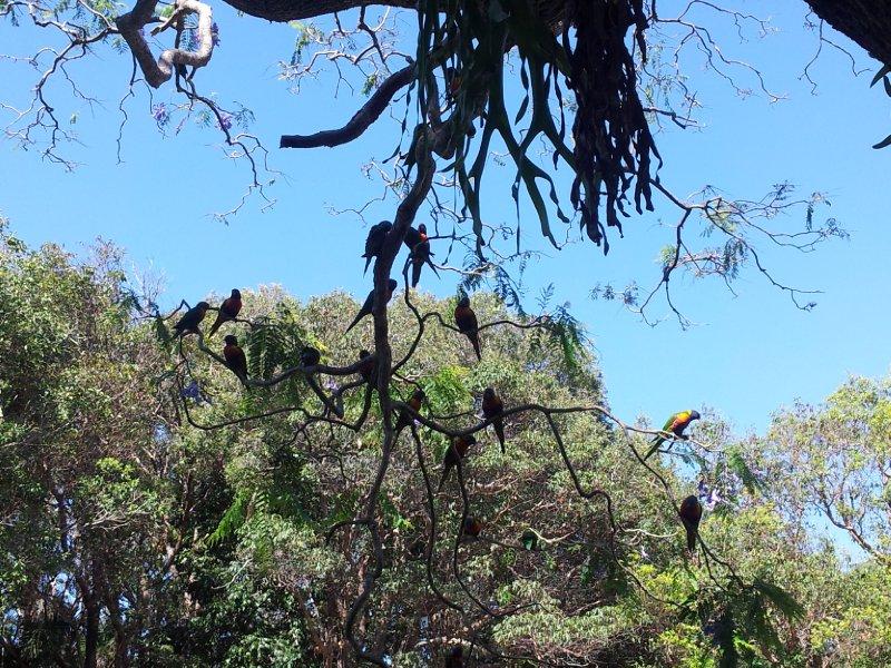 large_birds_in_tree.jpg