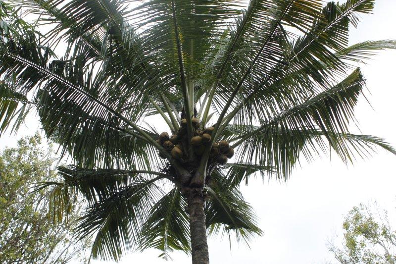 large_cocosnuts.jpg