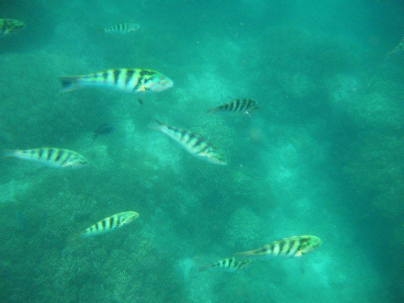 large_fish.jpg