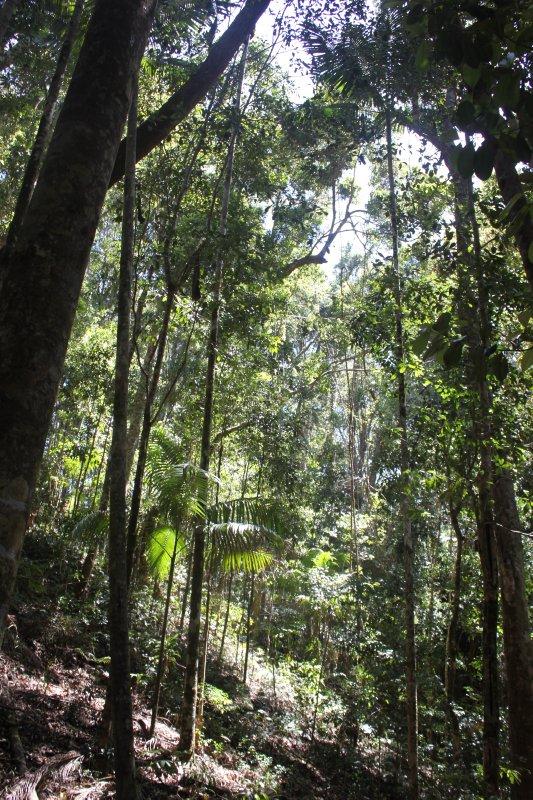 large_rainforest.jpg