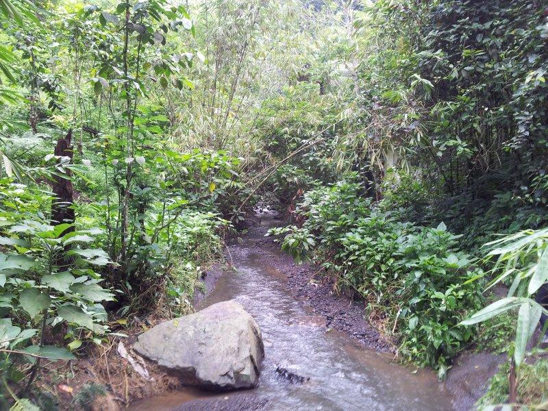 large_ricefieldwalk1.jpg