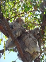 Mum and baby relax in the trees