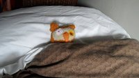 Owlie hogs the Fools bed!