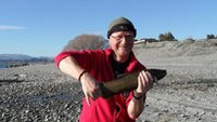 Handcaught brown trout, yes, really.