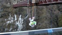 Buzz takes the plunge at the bungy bridge.