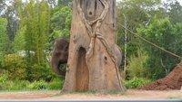 2012 elephant hide-and-seek world champion!