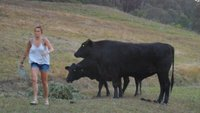 Neat and her livestock