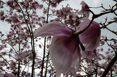 Kew Gardens in bloom