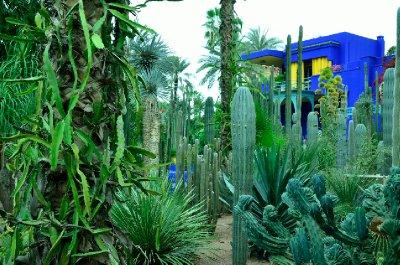 Cactus garden of Jardin Majorelle