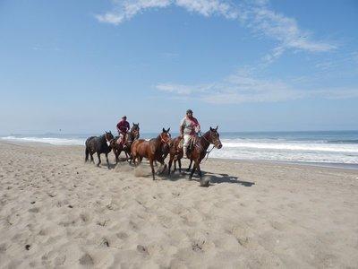 Horses at Pantanos de Villa