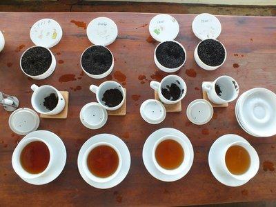 Tea tasting, Uva Halpewatte Tea Factory, Ella, Sri Lanka