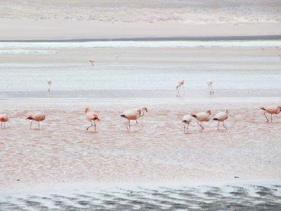 Laguna Colorado, Uyuni, Bolivia