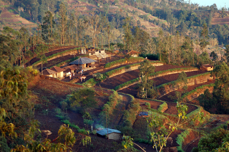 Farm on Crater Rim of Gunung Batur