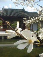 Dr Sun Yat-Sen's Classical Chinese Garden - Lily